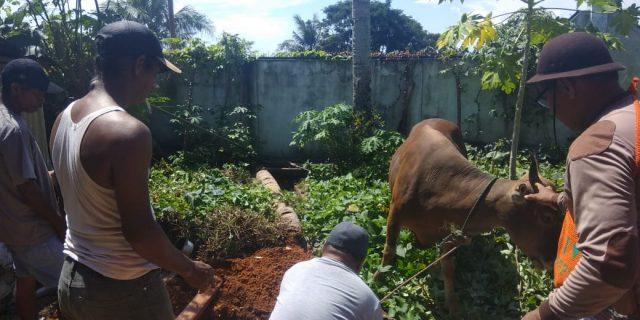 HKW Jayapura Salurkan 250 Kupon Kurban